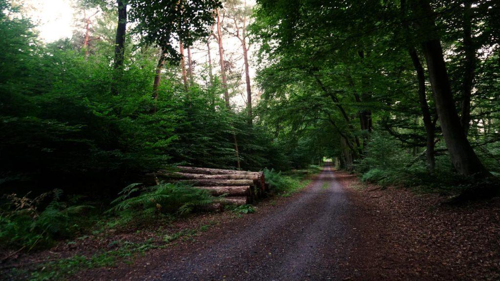 Natuurpark Hohe Mark - Noordrijn Westfalen